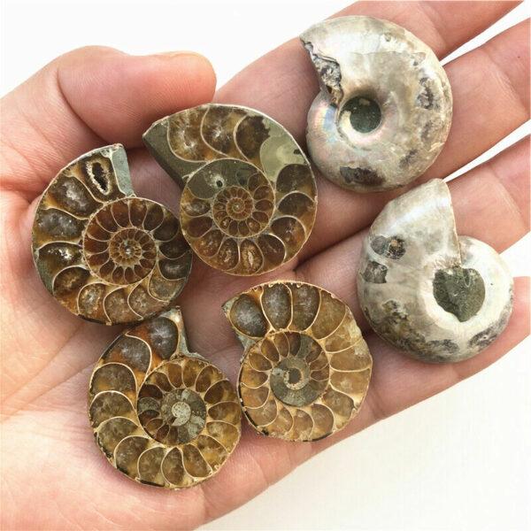 1 Pair of Split Ammonite Fossil Specimen Shell. Madagascar Natural Quartz Crystal 1